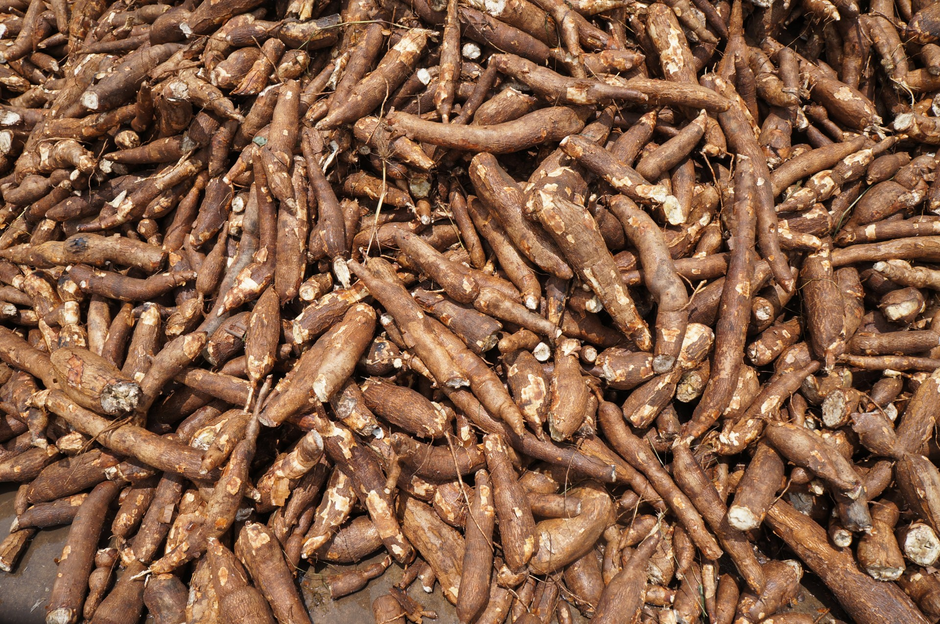 Nextgen Cassava Breeding Project Atlas Of The Future
