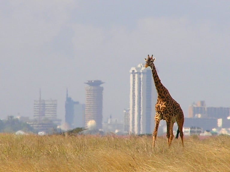 Nairobi National Park is the world's only game reserve found within a major city