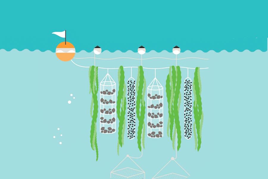 Greenwave regenerative ocean farming vertically underwater
