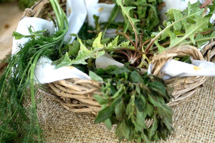 Eixarcolant teaches which weeds and native plants are edible
