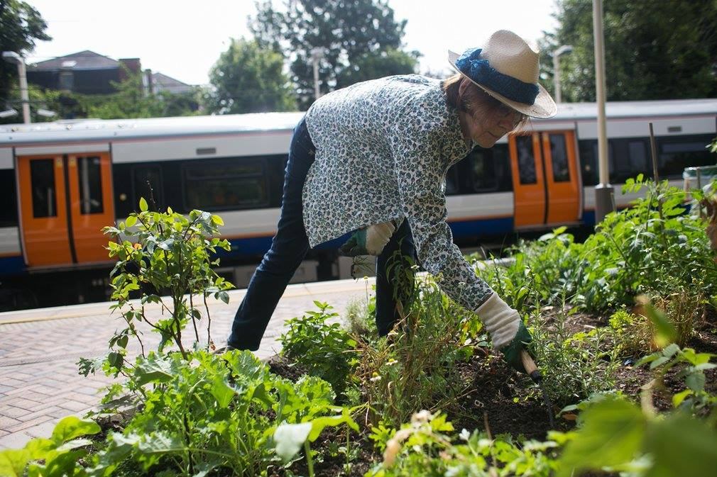 Energy Garden and why we need to add agriculture to our transportation networks