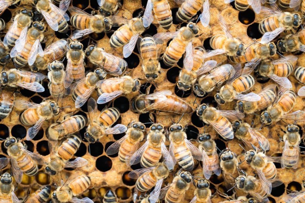 Flow Hive beekeeping start-up