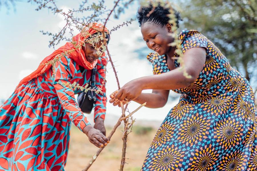 Justdiggit: regenerative agriculture in Kenya and Tanzania