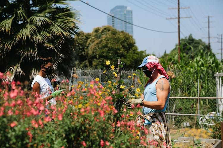 LA Green Grounds volunteers can help spread the word