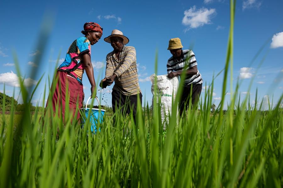 organic fertiliser Kenya