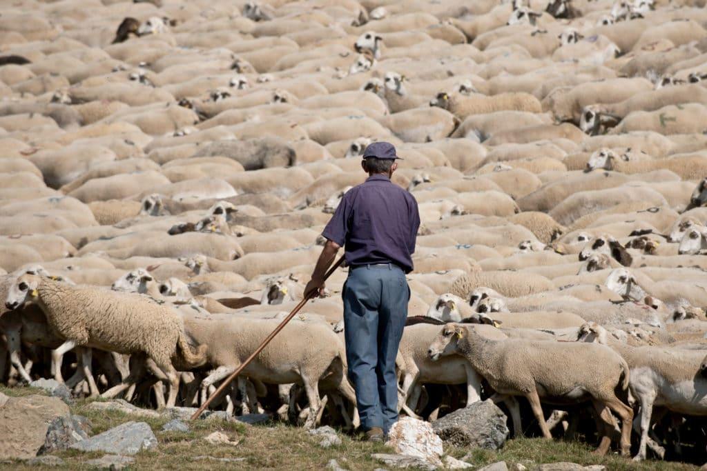 Xisqueta Sheep Farming