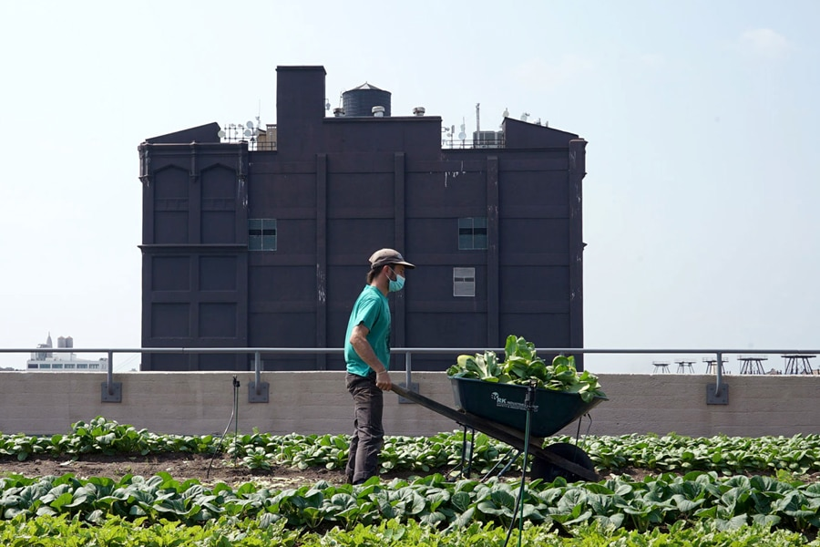 Rooftop yields at Brooklyn Grange