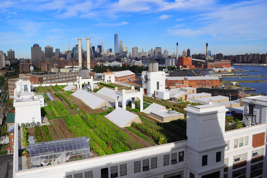 Brooklyn Grange is a rooftop farm in New York City