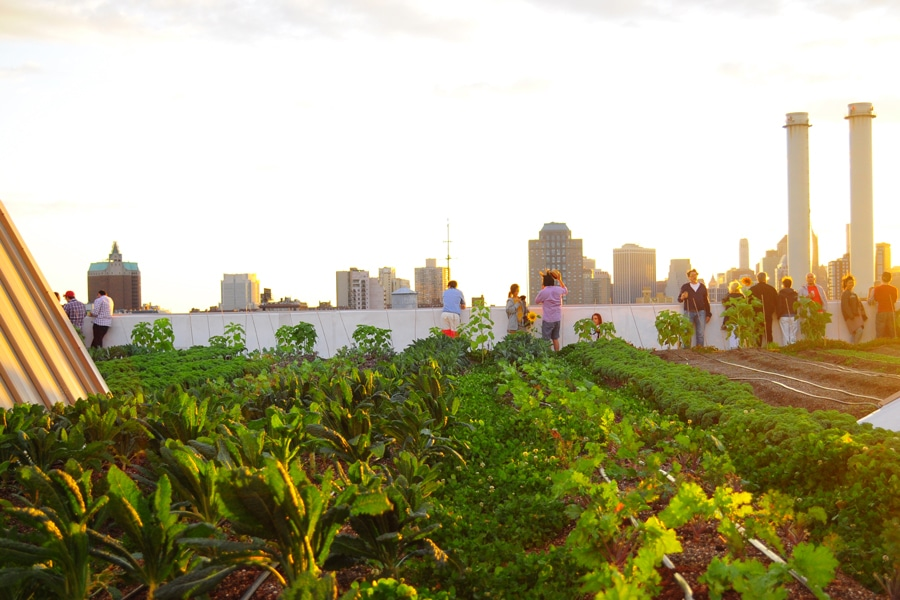 Sustainable urban agriculture at Brooklyn Grange Farm