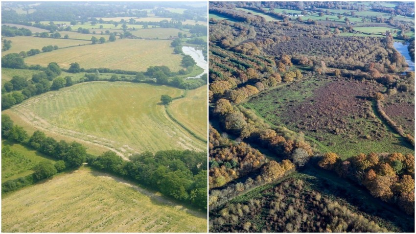 Knepp estate before and after