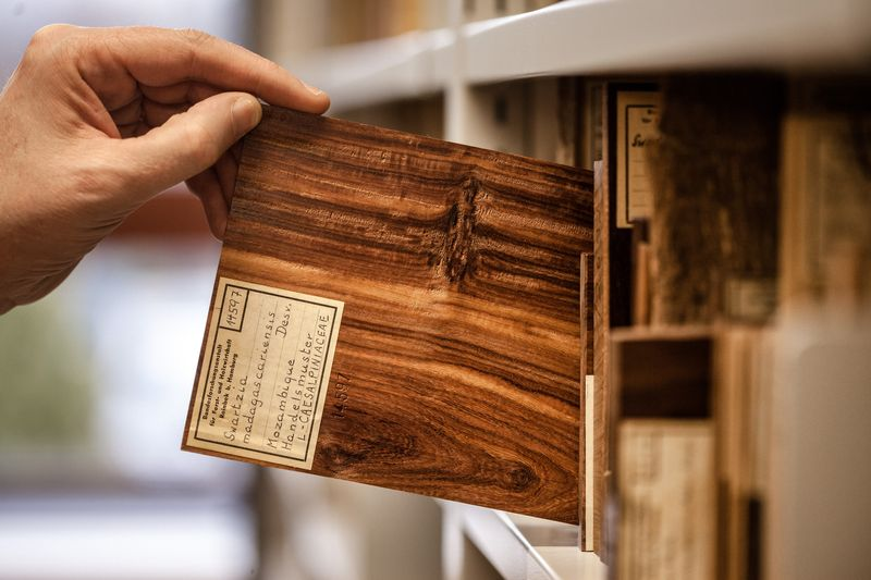 Centre of Competence on the Origin of Timber