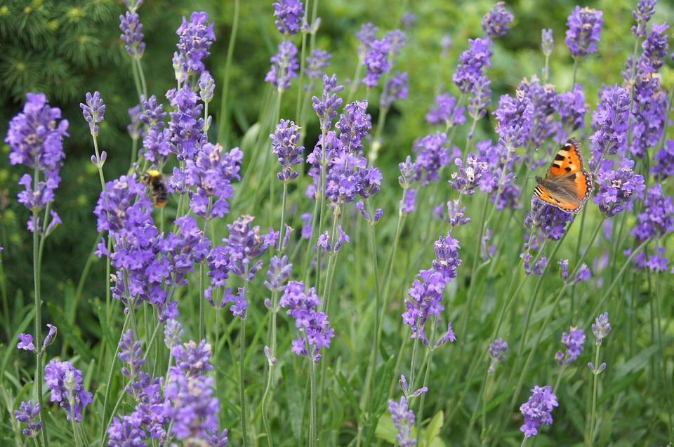 urban Butterfly Monitoring Scheme