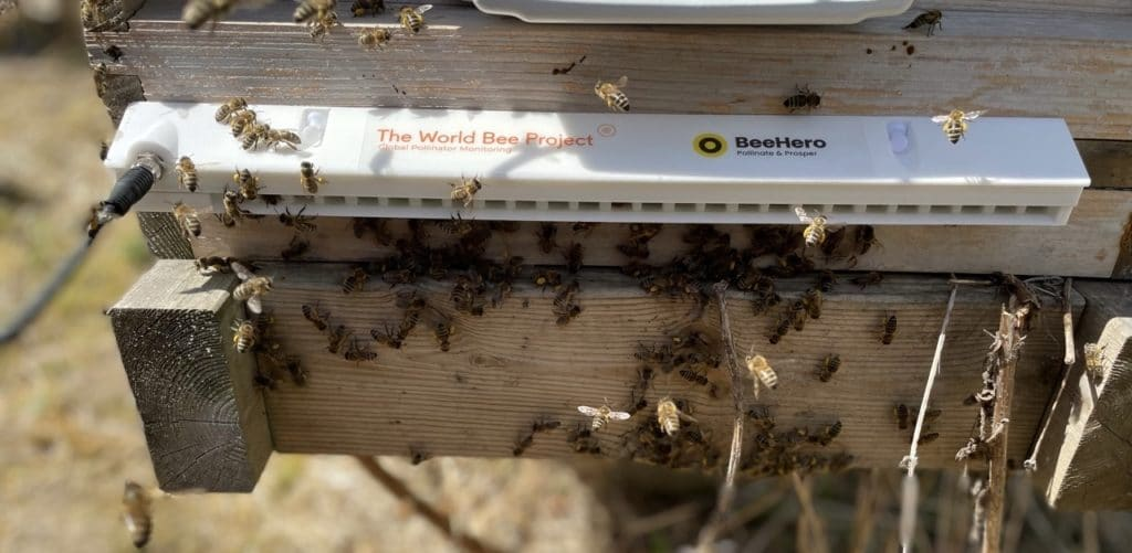 World Bee Project