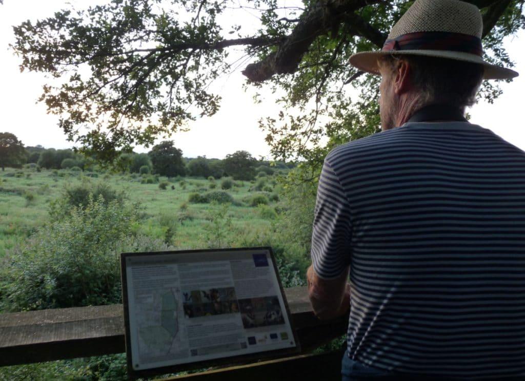 Viewing platform at Knepp Wildland