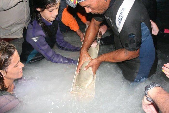 Caribbean Sharks Education Program